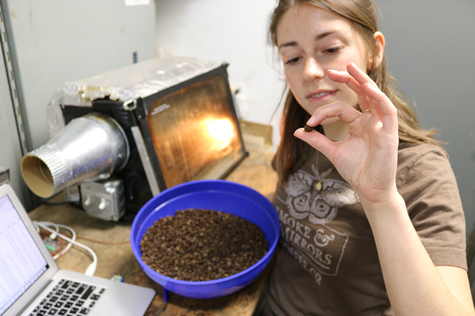 UVic chemistry student Hannah Charnock experimenting with bean roasting at Smoke and Mirrors.Photo: Julian Sketchley