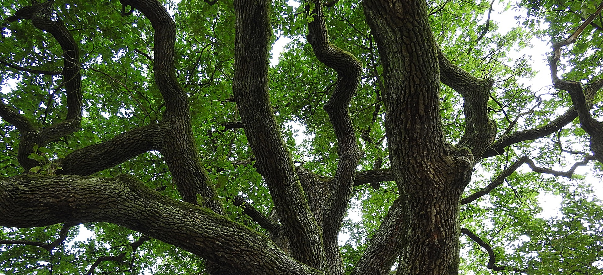 """""""And the tree grew, sending out innumerable branches, and thrusting out the most fantastic roots"""""""