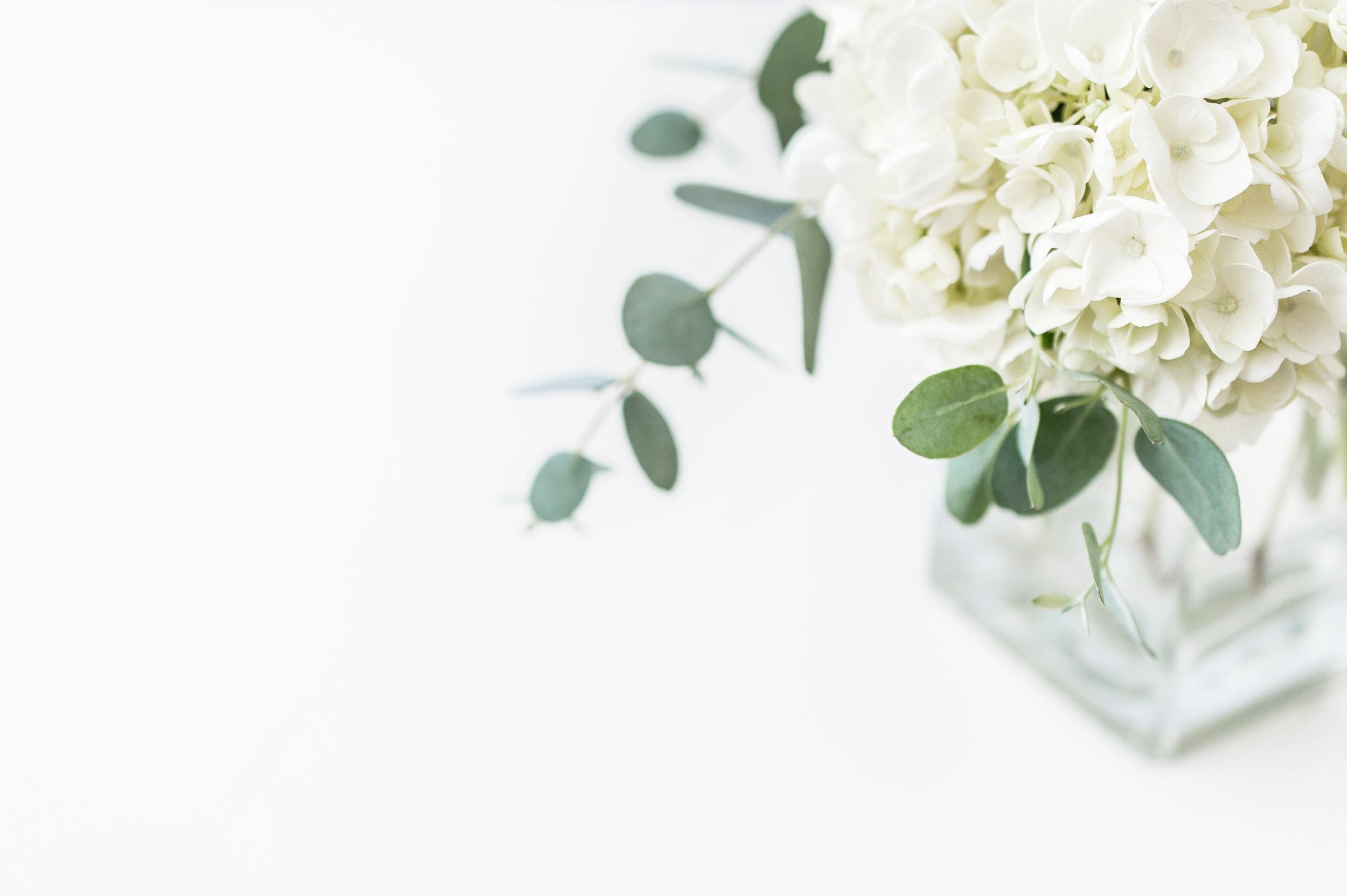 White Hydrangea in Vase_Right Justified.jpg