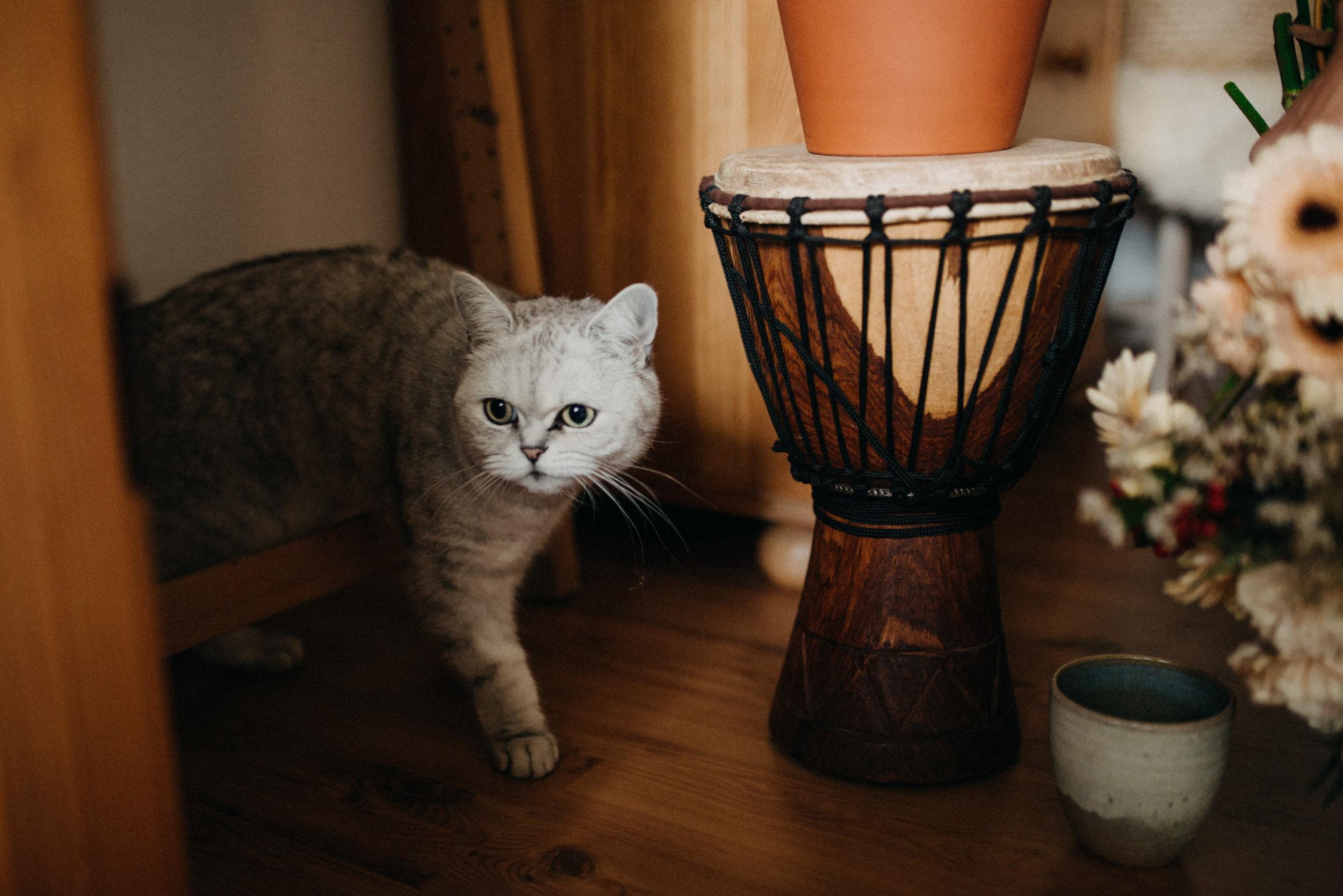 eli-cats-25.jpg