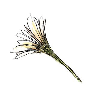 flower3.png