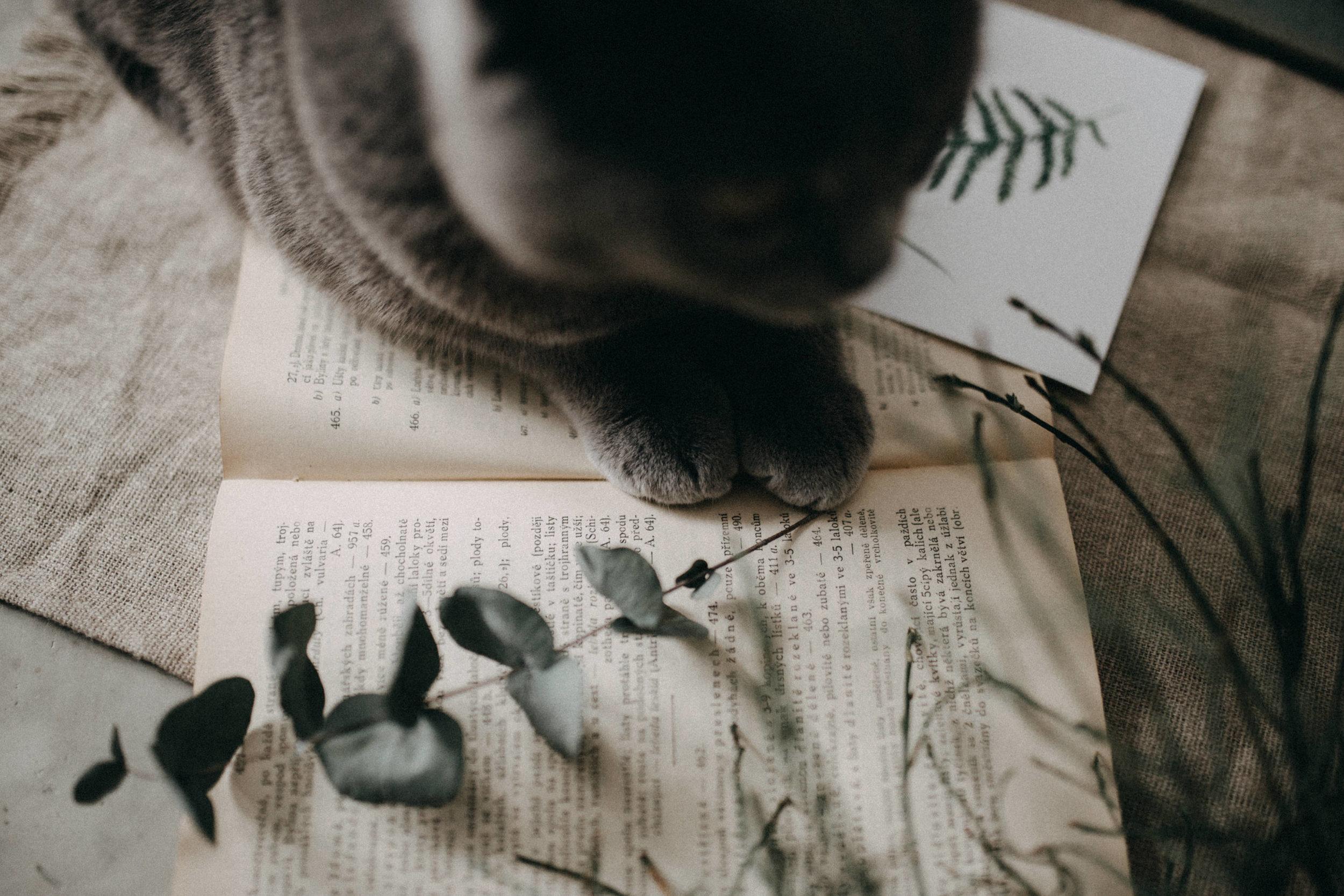 watercolor-print-cat.jpg