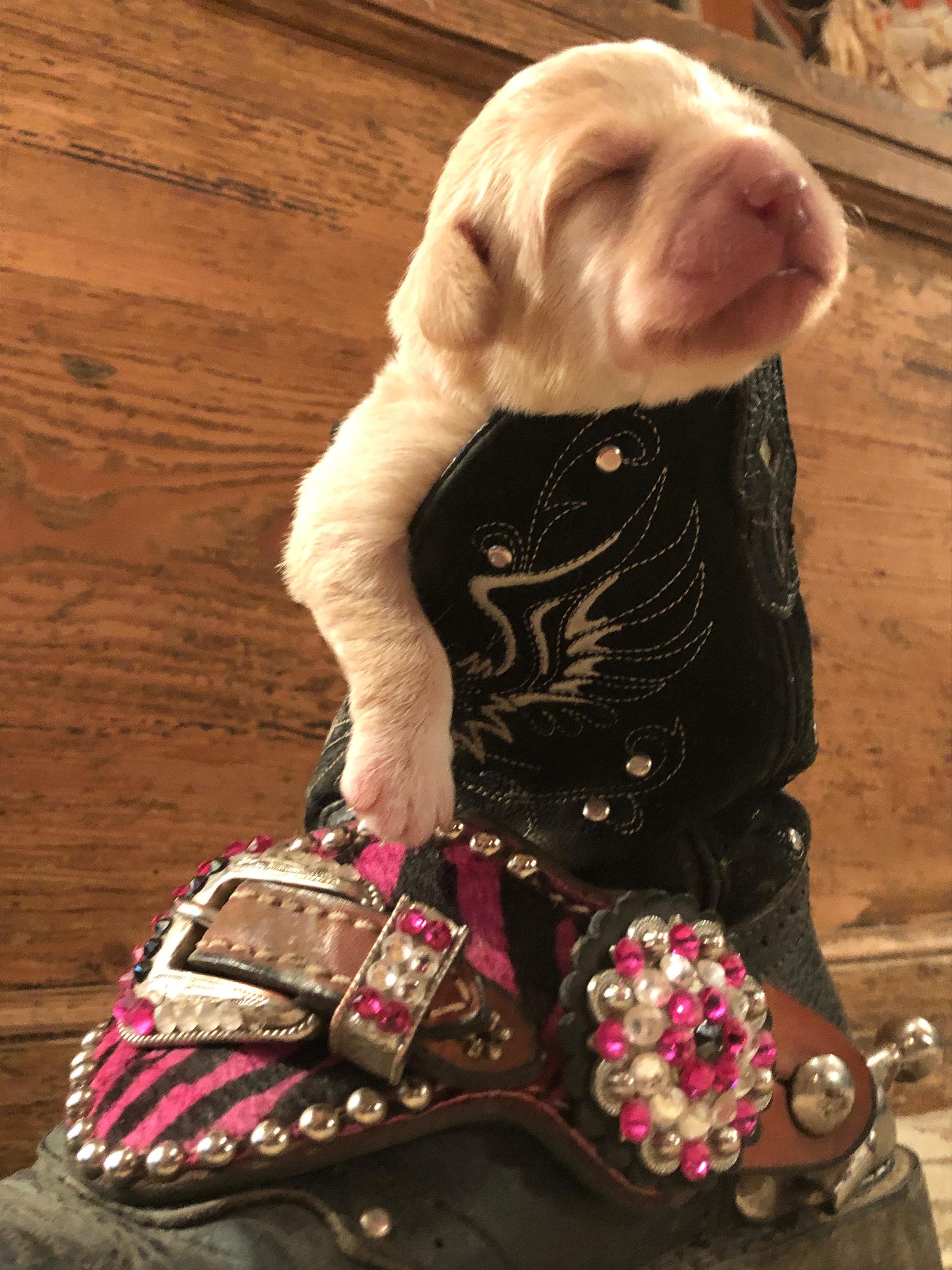 puppy 2 pink.jpg