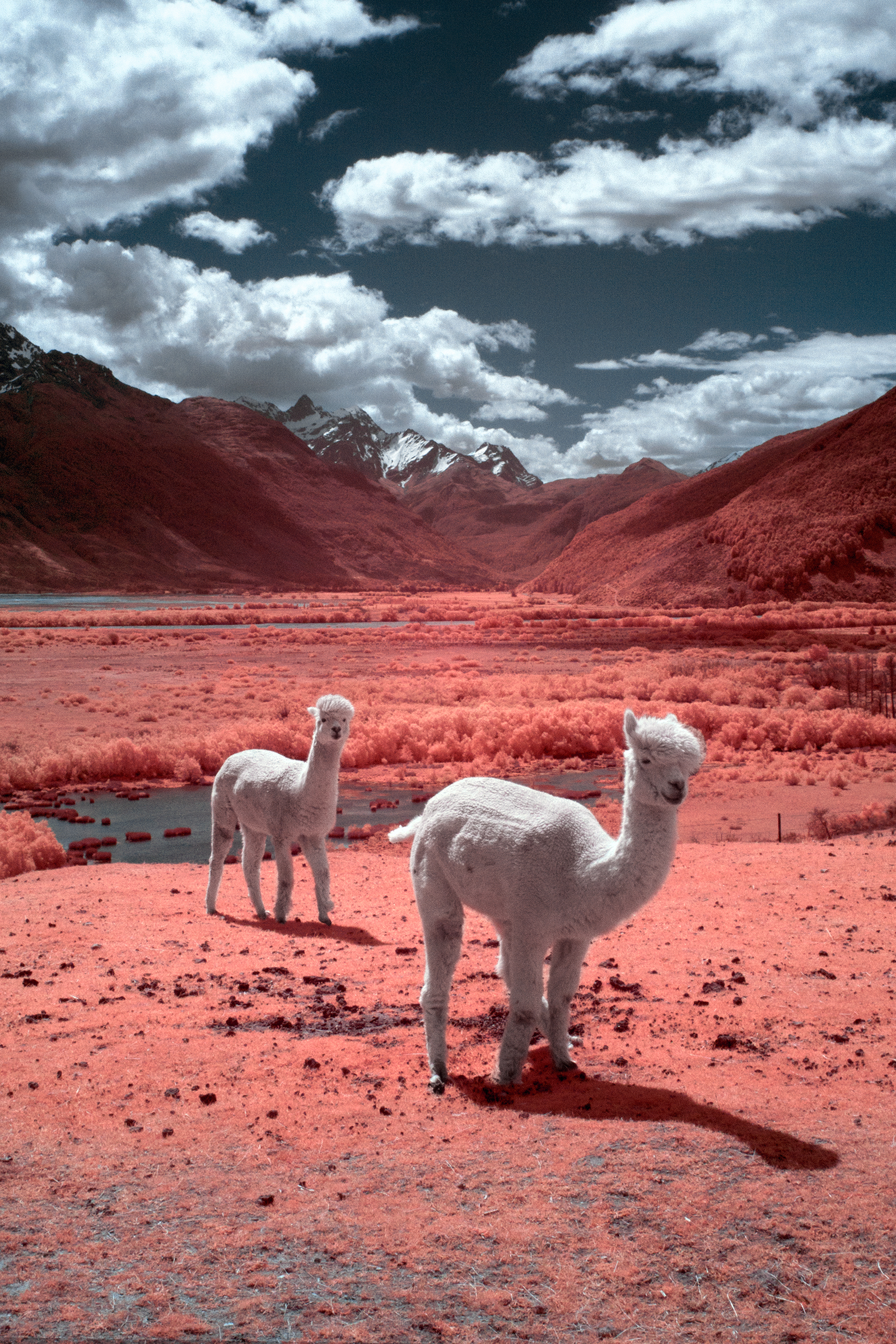 Paul Hoi Group Study Infrared Photography New Zealand 11