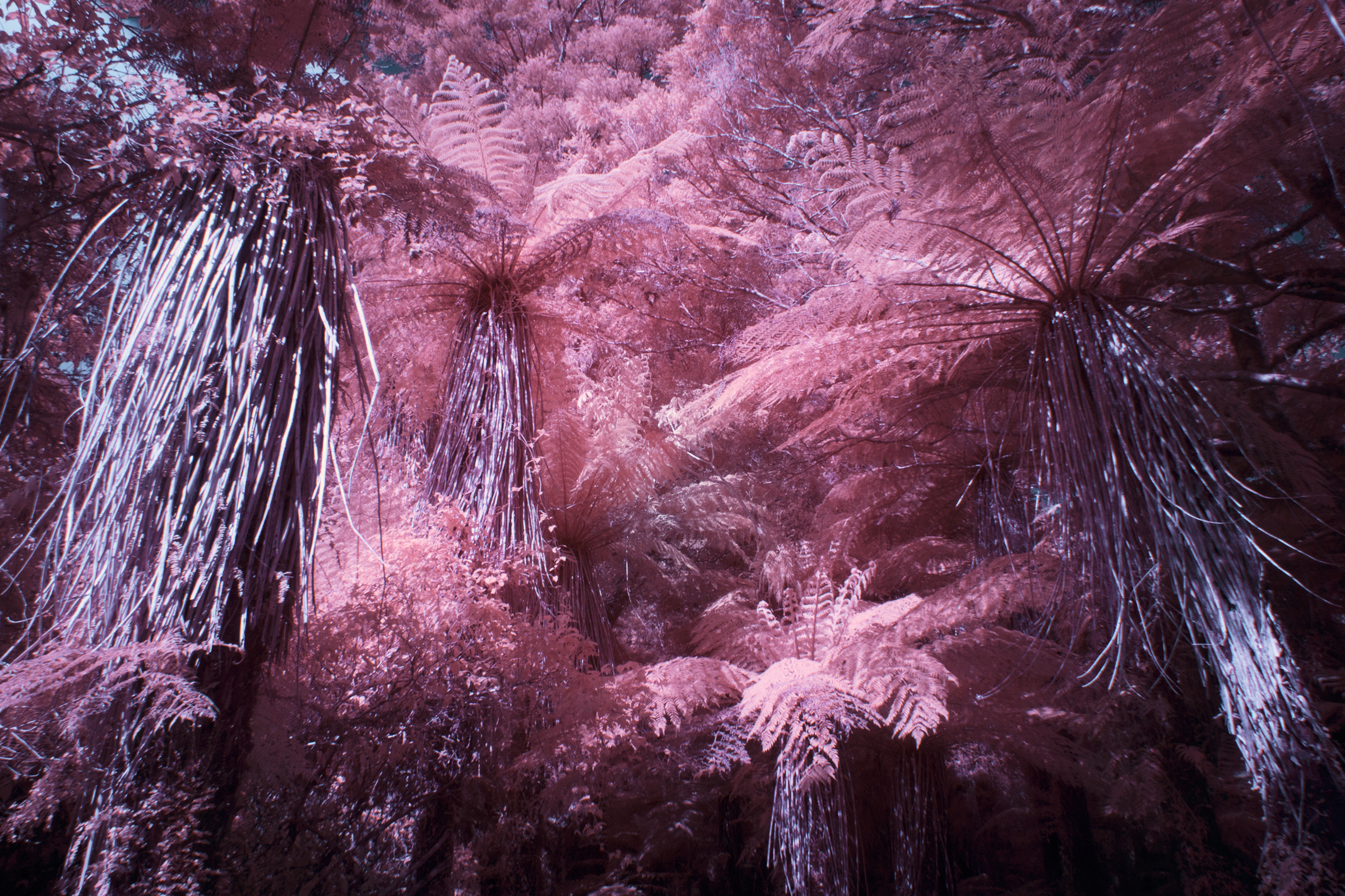 Paul Hoi Group Study Infrared Photography New Zealand 9