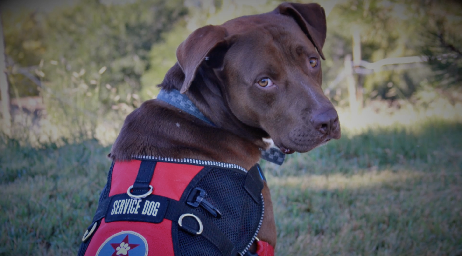 Freedom Service Dogs | Fundraising Video