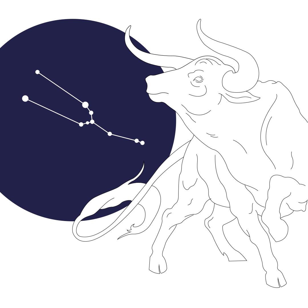 Taurus  | Fall 2018 | Role: illustration