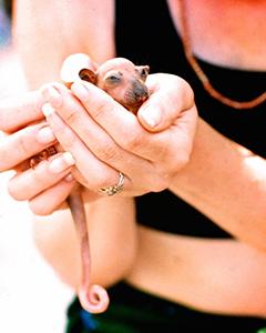 D WINNER pawprintzau@netspace.net.au -rescued -cuscus. e-briefjpg.jpg