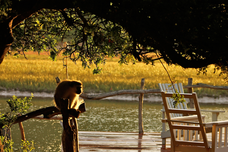 Vervet Silhouette, South Africa, Canon DSLR