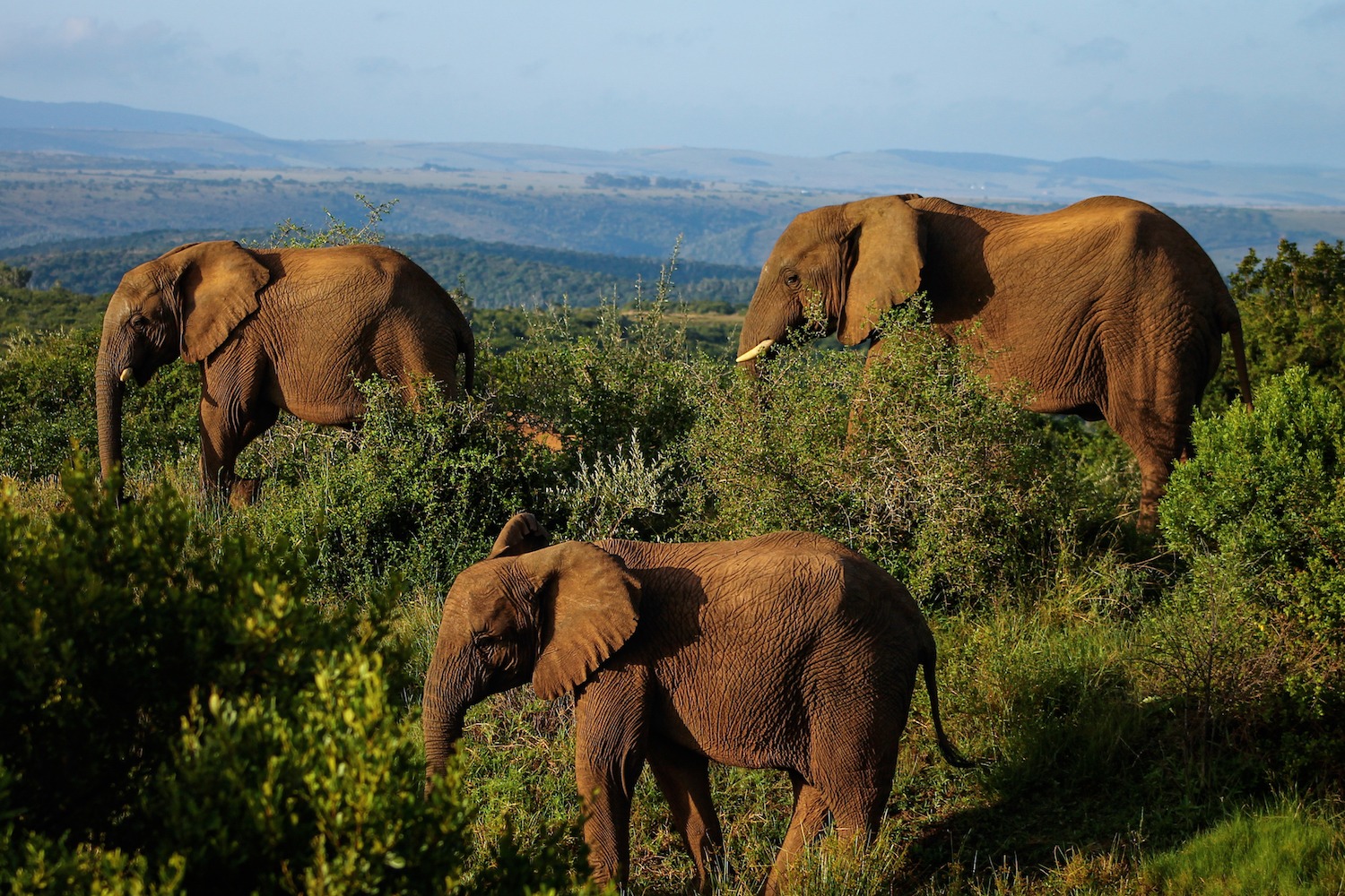 Elephant Trifecta, South Africa, Canon DSLR
