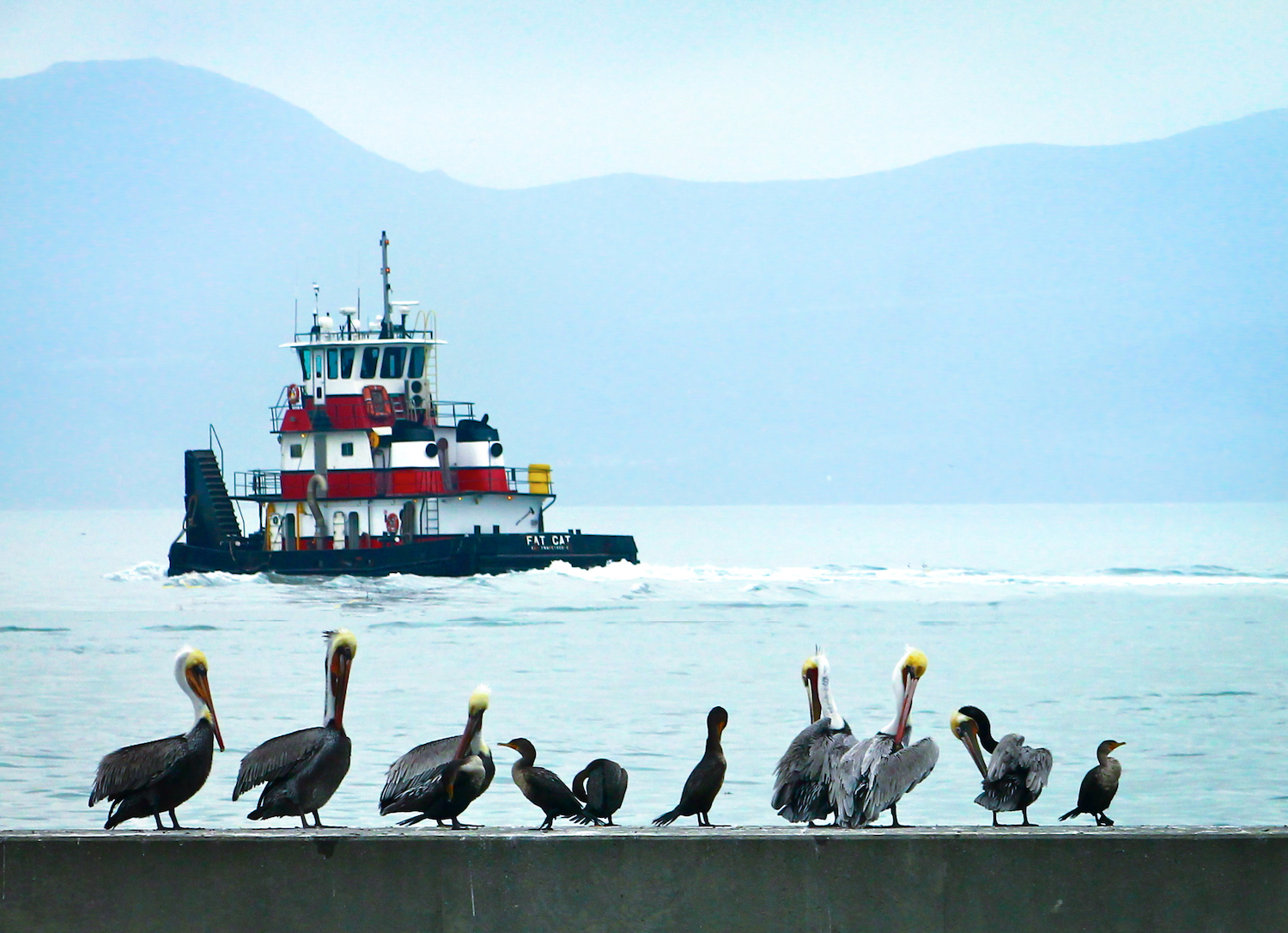 Birds and a Boat, San Francisco CA, Canon DSLR