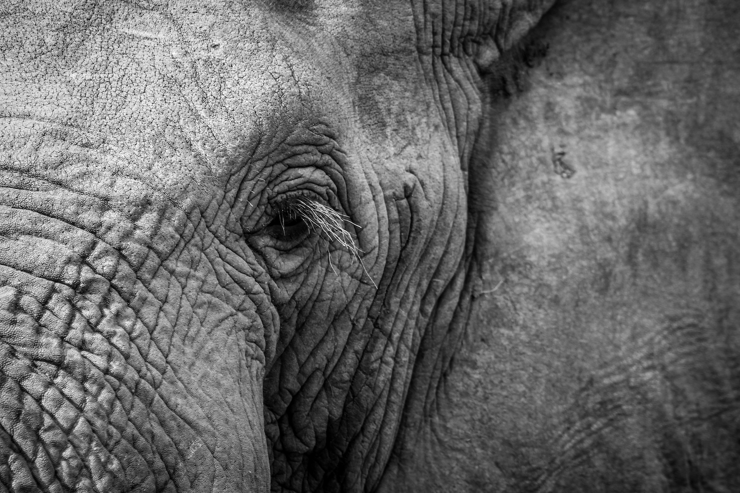 Elephant Close-up, South Africa, Canon DSLR