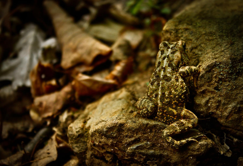 Hidden Toad, Atlanta GA, Canon DSLR