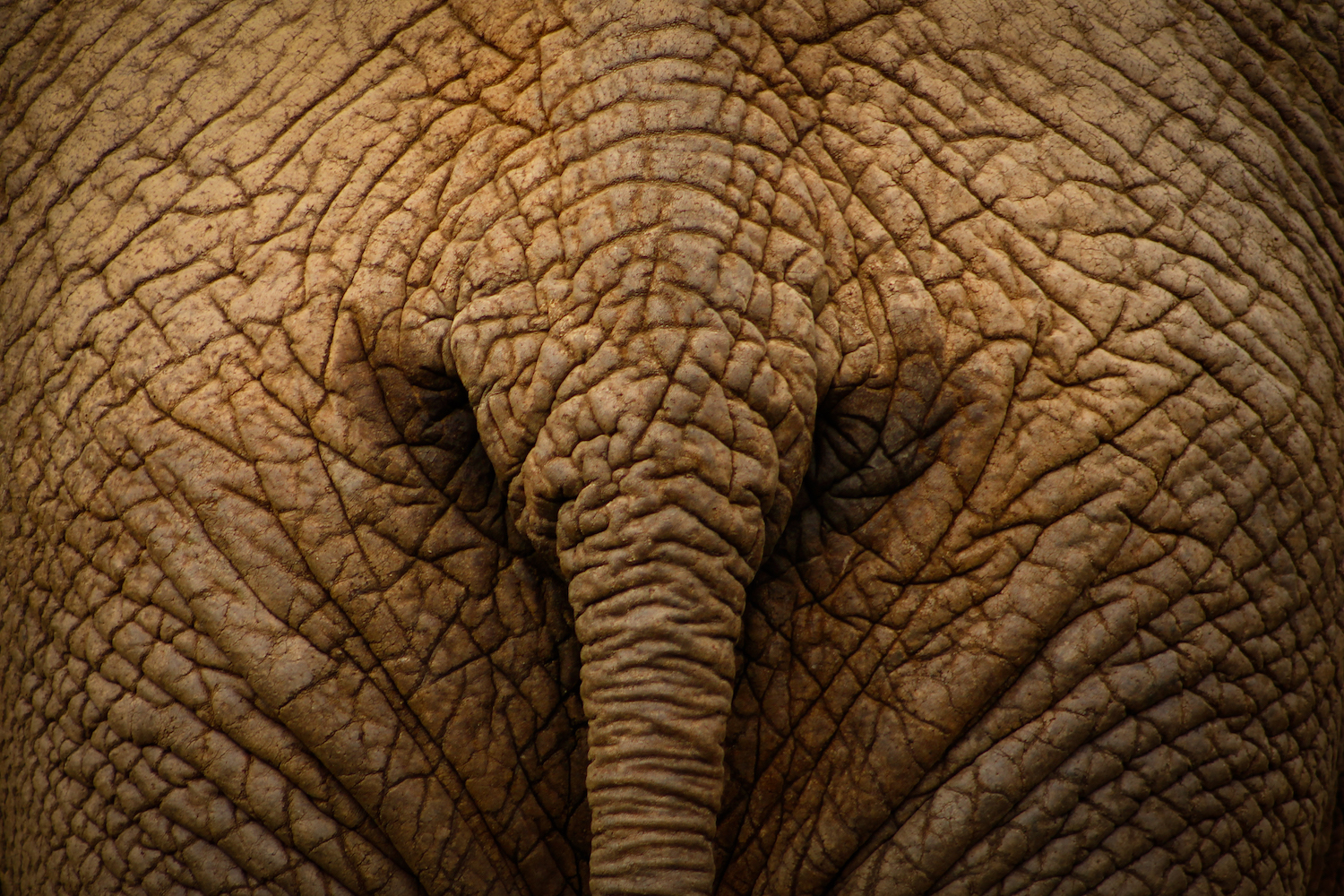 Elephant Rear, South Africa, Canon DSLR