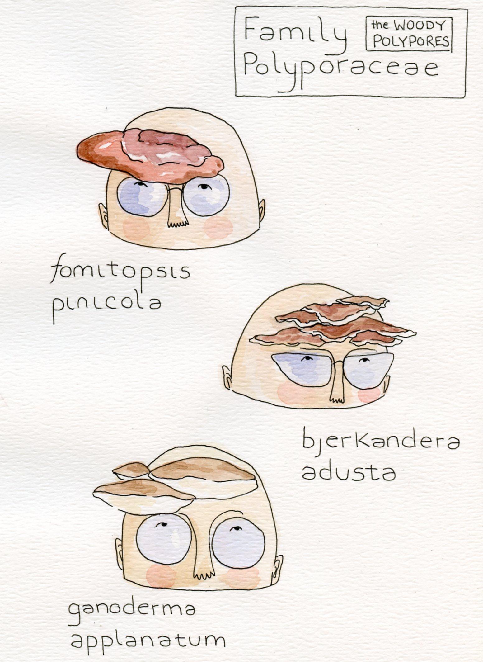 Mushroom Visors Postcard
