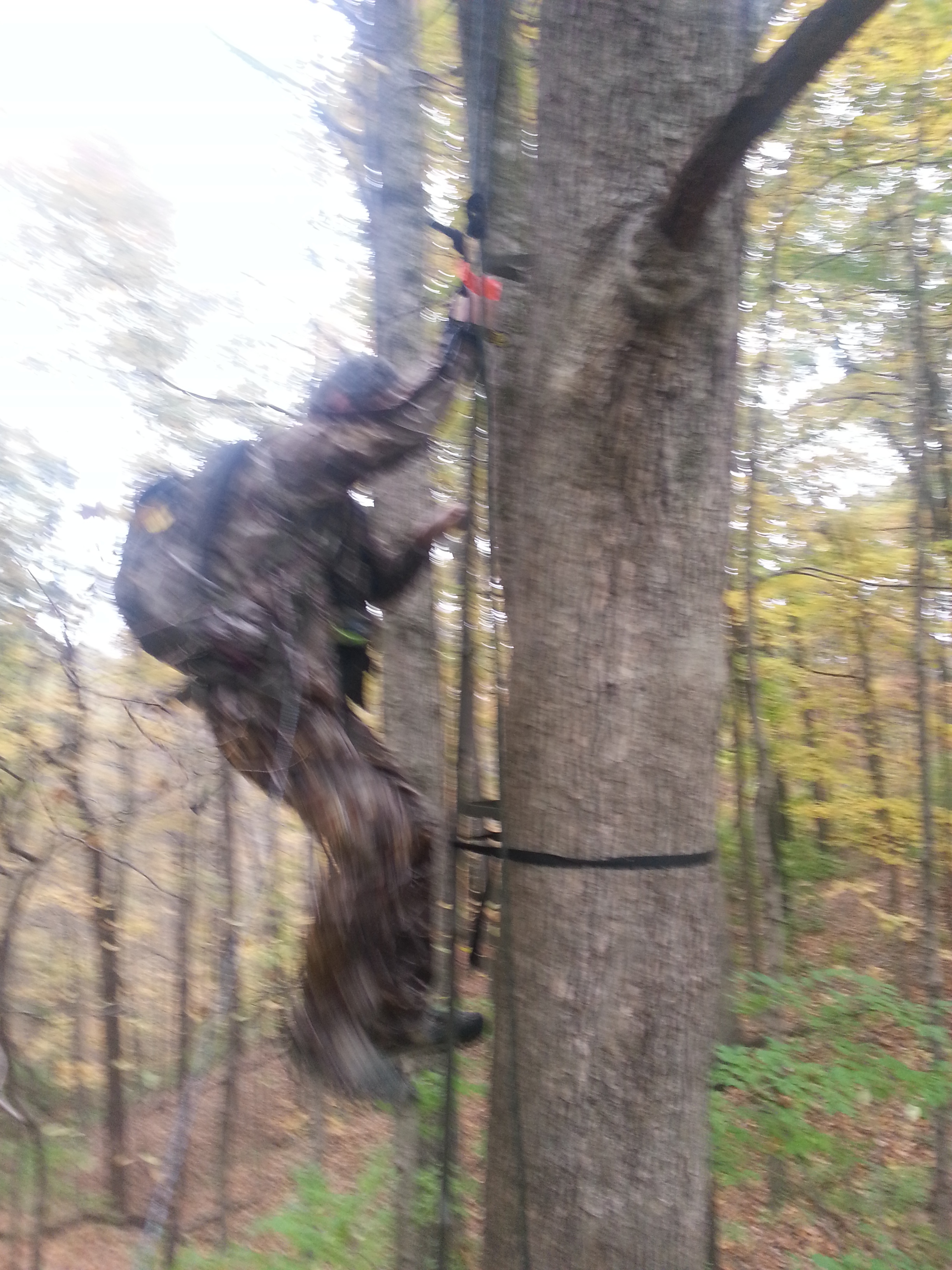 Tree Climing Safety