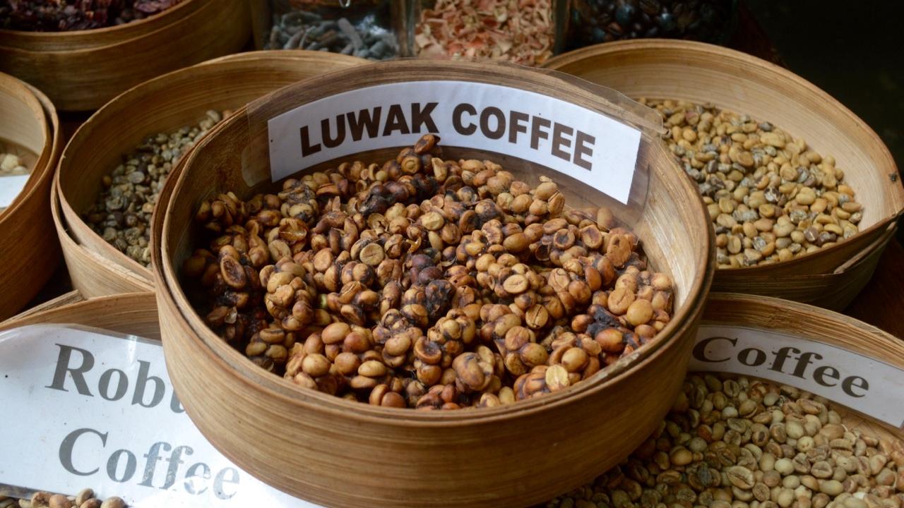 Famous Bali Coffee - Kopi Luwak