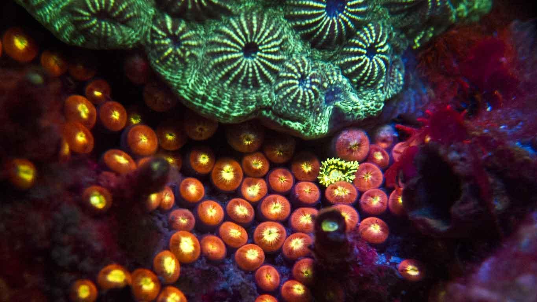 Gili UV Scuba Dive