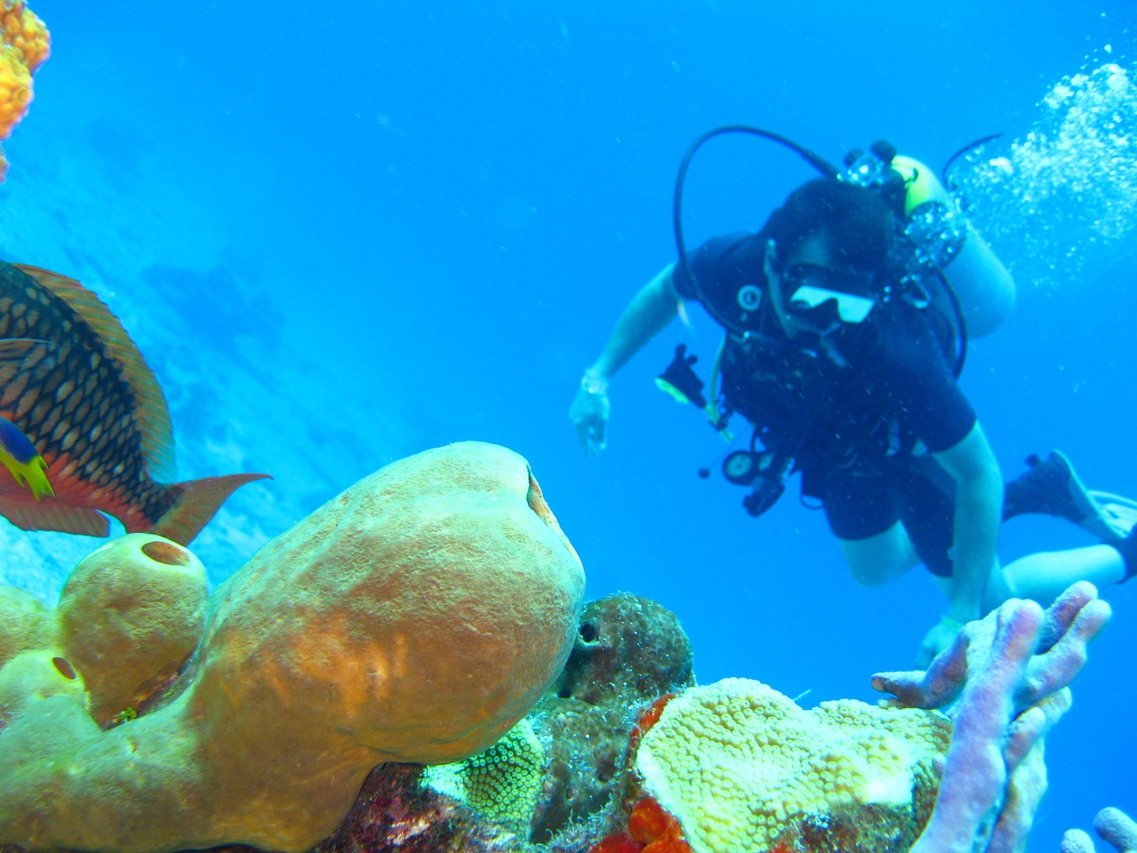 Receive Scuba Diving Certification for Beginners