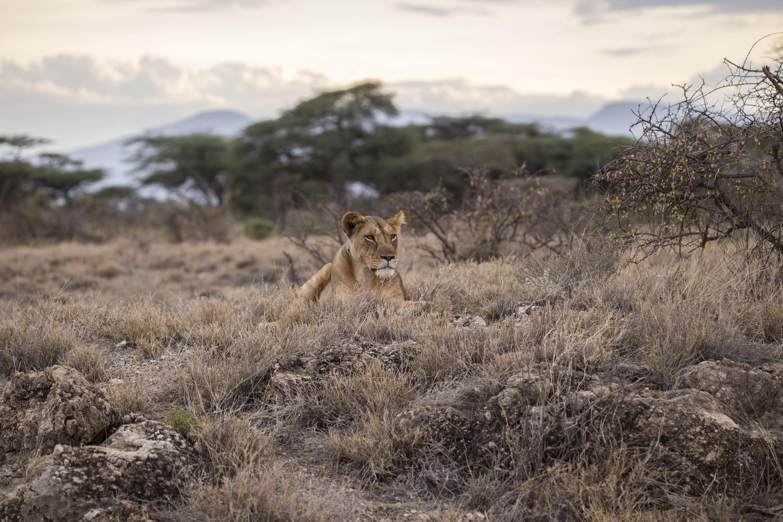 Safari - Kicsit távolabb, de két órás úttal elérhető egy rezervátum (Aquila Privat Game Reserve), ahol jó eséllyel megfigyelhetők a big five akár minden tagja. A túra fakultatív, ára körülbelül 100-150 euró.