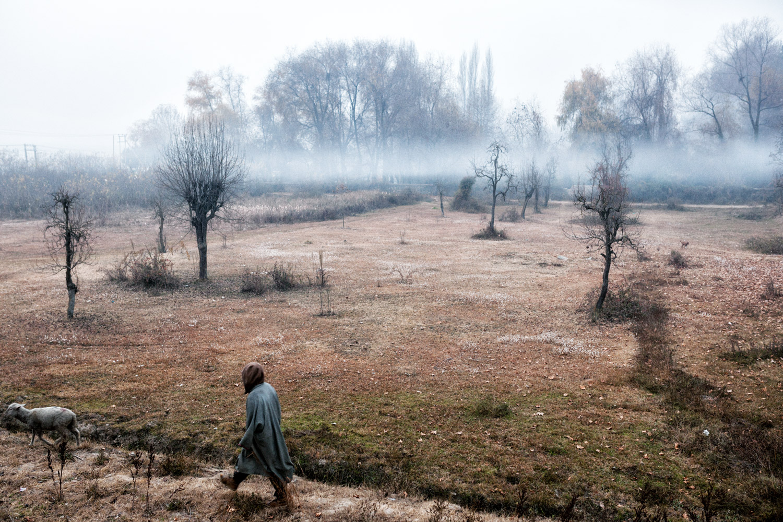Kashmir. The Nishat gardens of Srinagar.