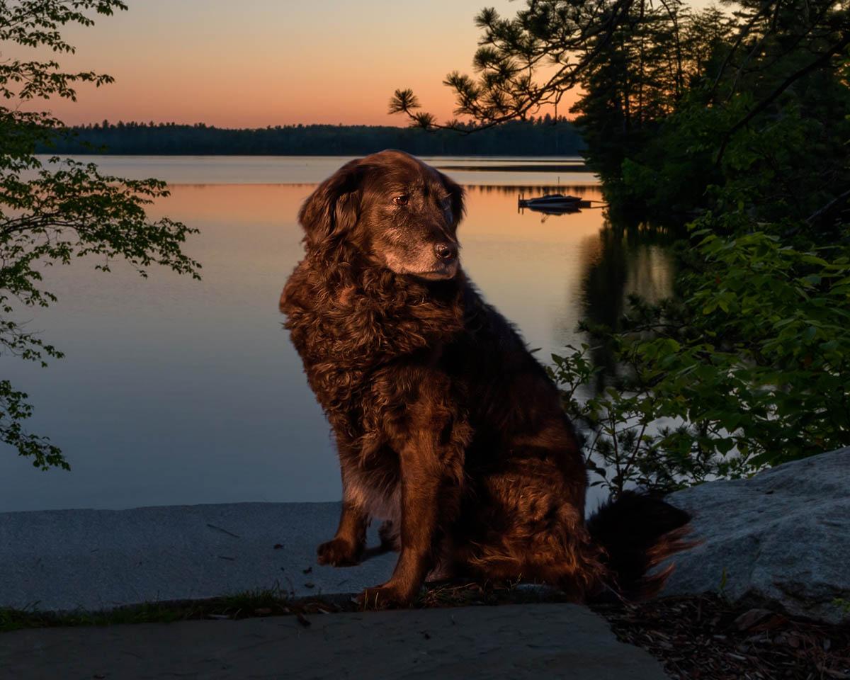 lakeside_dog