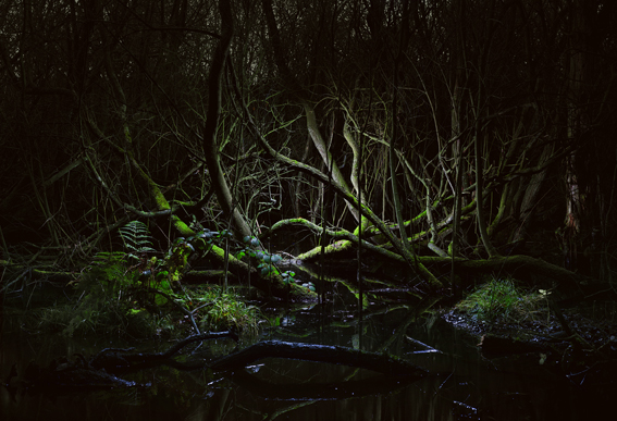 Tim Simmons - Swamp #6  90 x 61.5 Edition 10 + 2AP