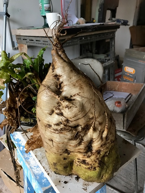 The field grew sugar-beet, which Kabir described as emerging 'like huge beasts, monsters disturbing the soil' He has cast them in bronze, to become the centrepiece of his art installation.