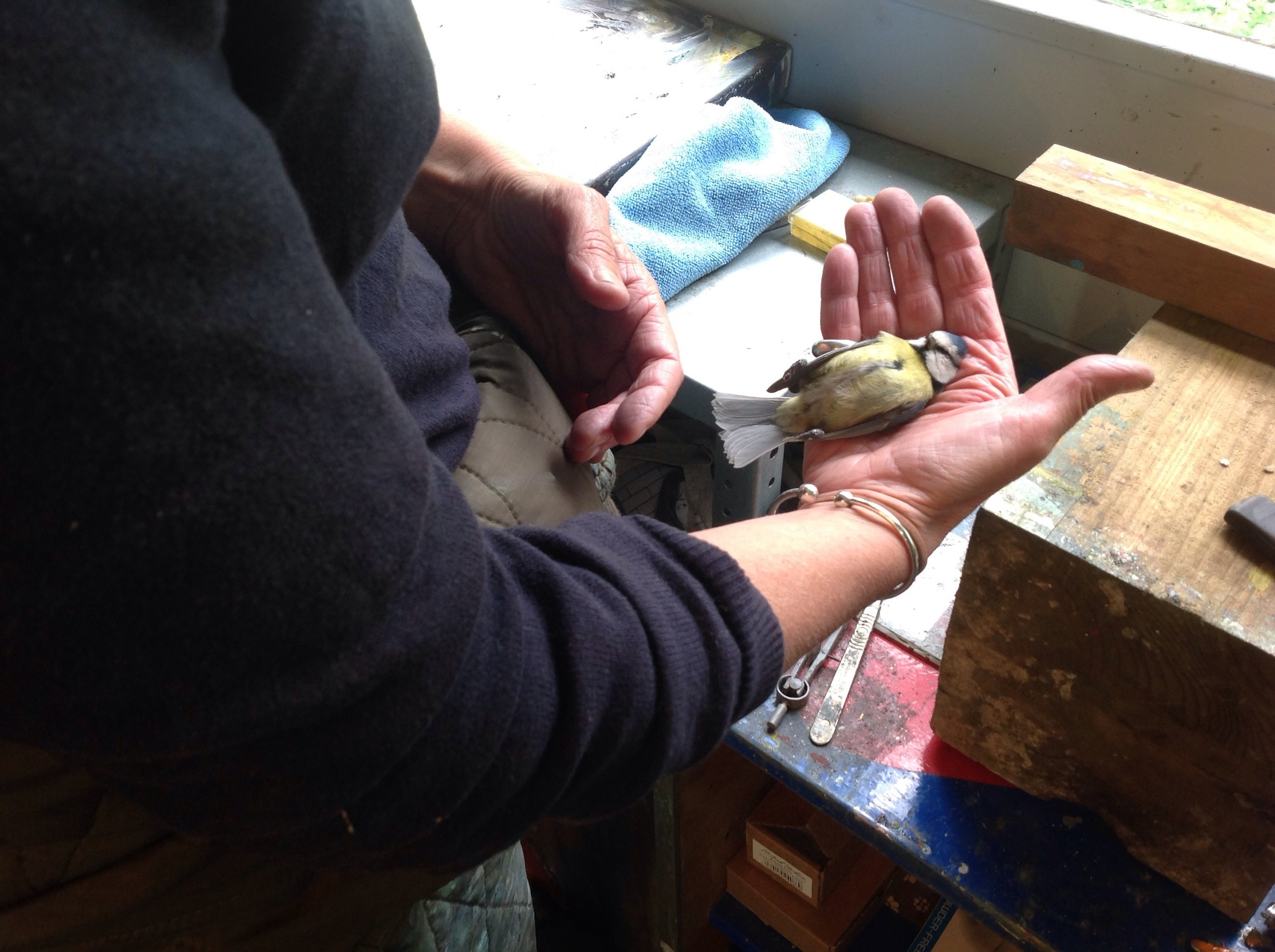 A dead bird in Nessie Stonebridge's studio