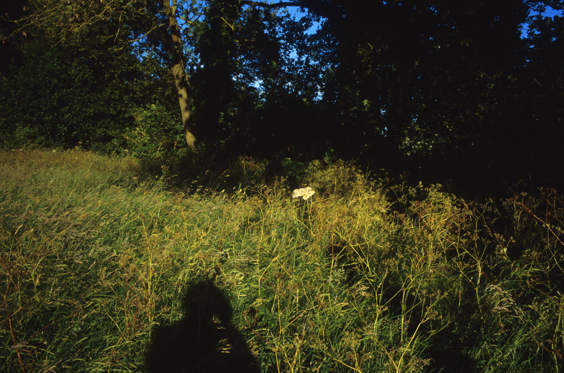 Shadow, Cowpasture Lane, Suffolk, 2014; 28.5 x 42 inches, Edn.of 3; 22 x 32 inches, Edn.of 5