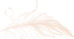 BH_Feather2_Select_Coral.png
