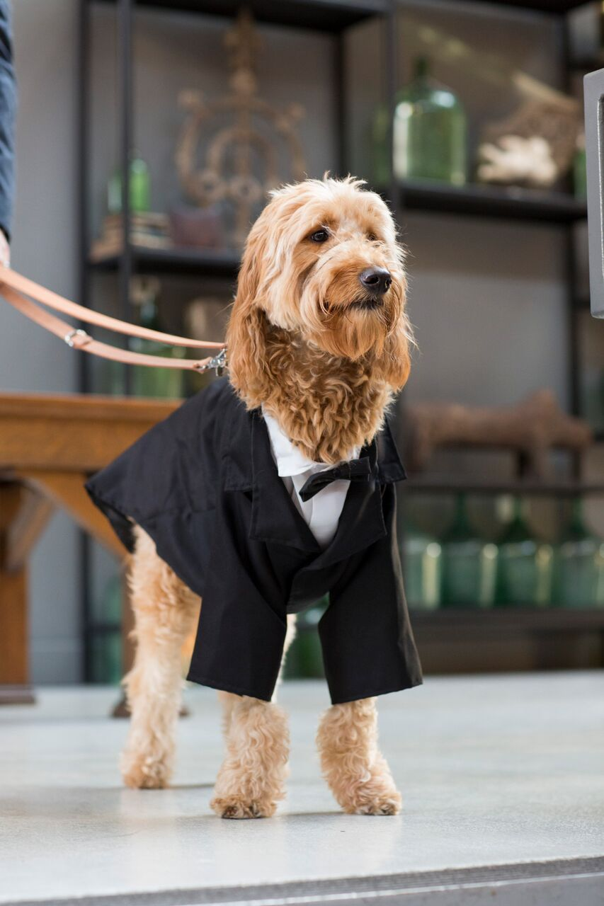 couples dog in wedding ceremony  Planning By Wrap It Up Parties  Artifact Events