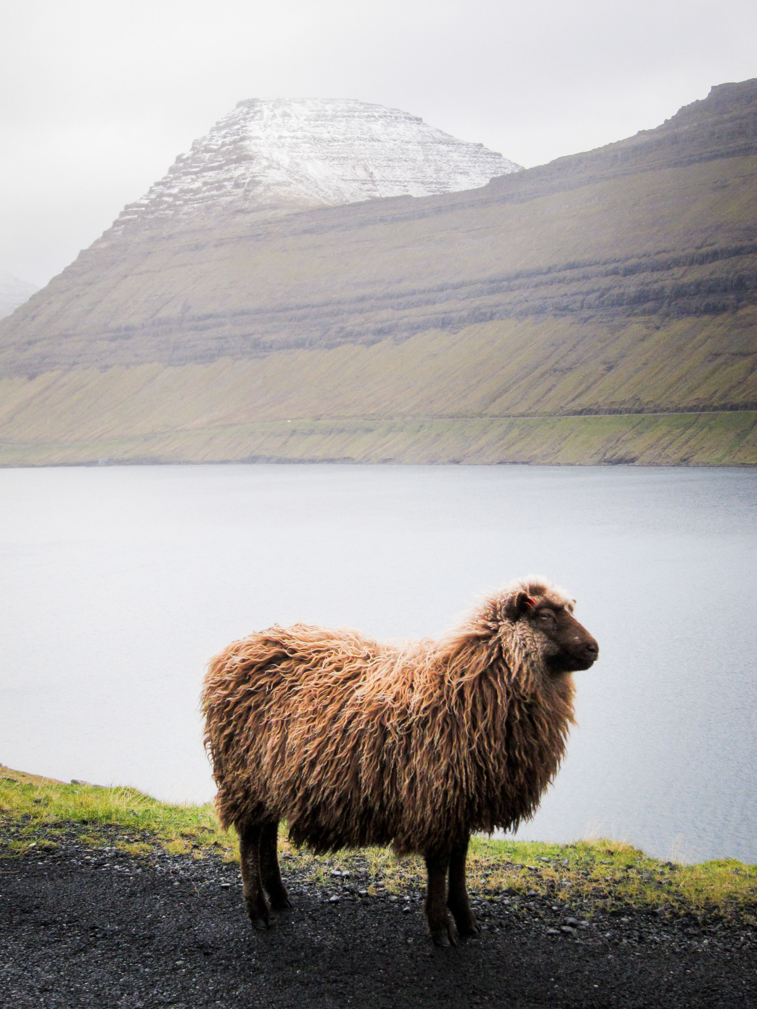 Faroe Islands 2018-122.jpg