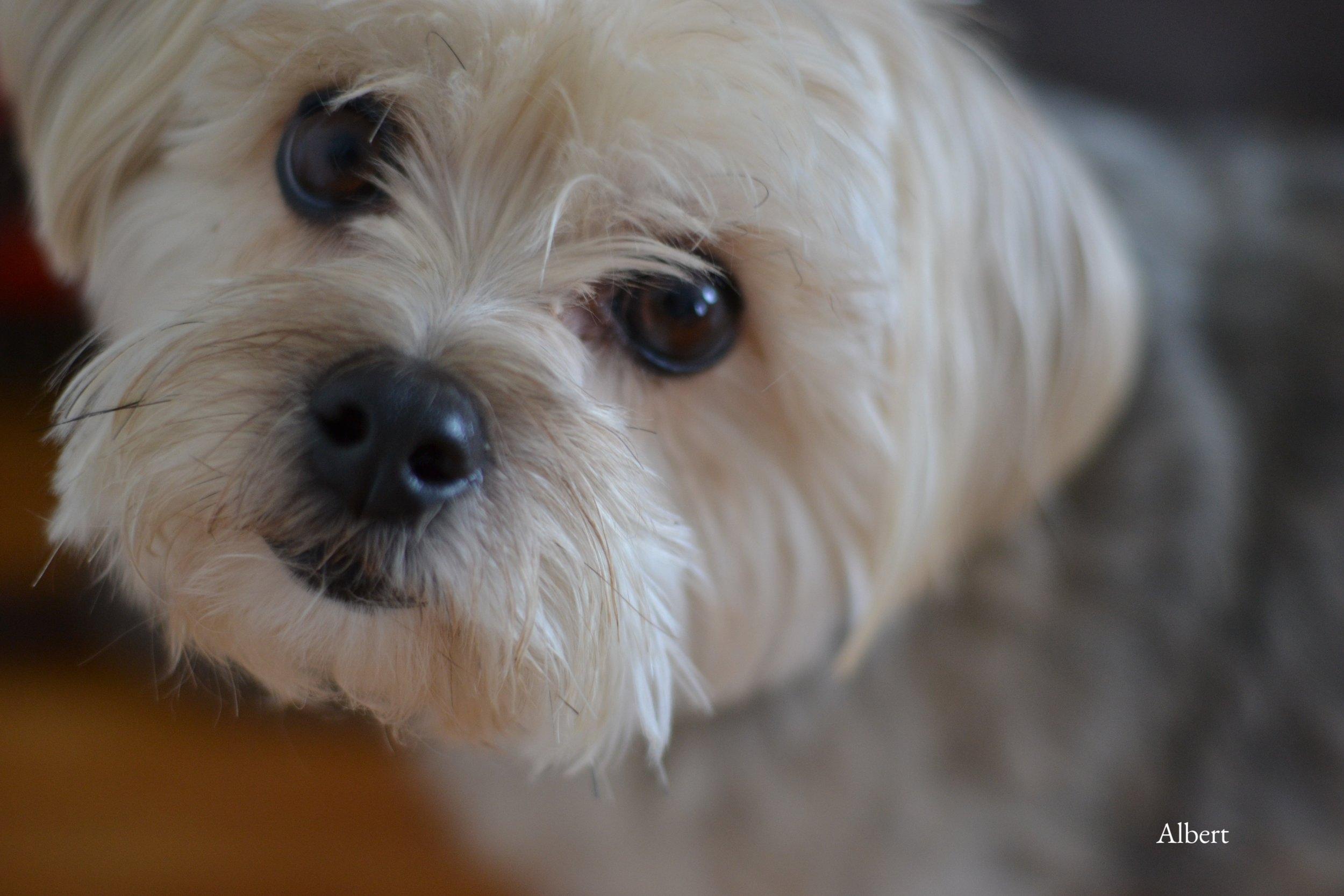 albert-mon-chien