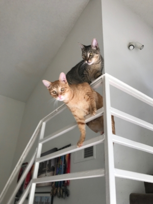 spartan cats.jpg