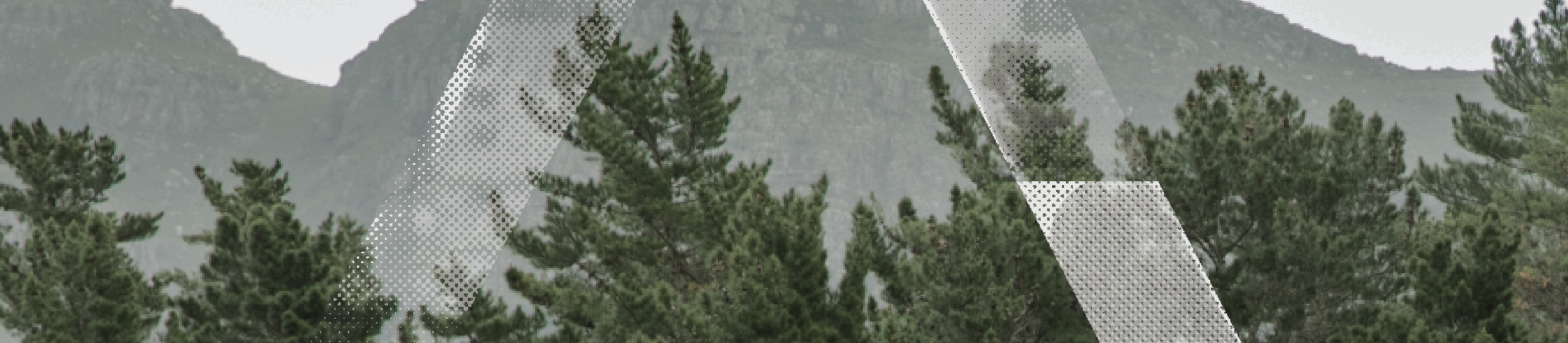 tree for tree -