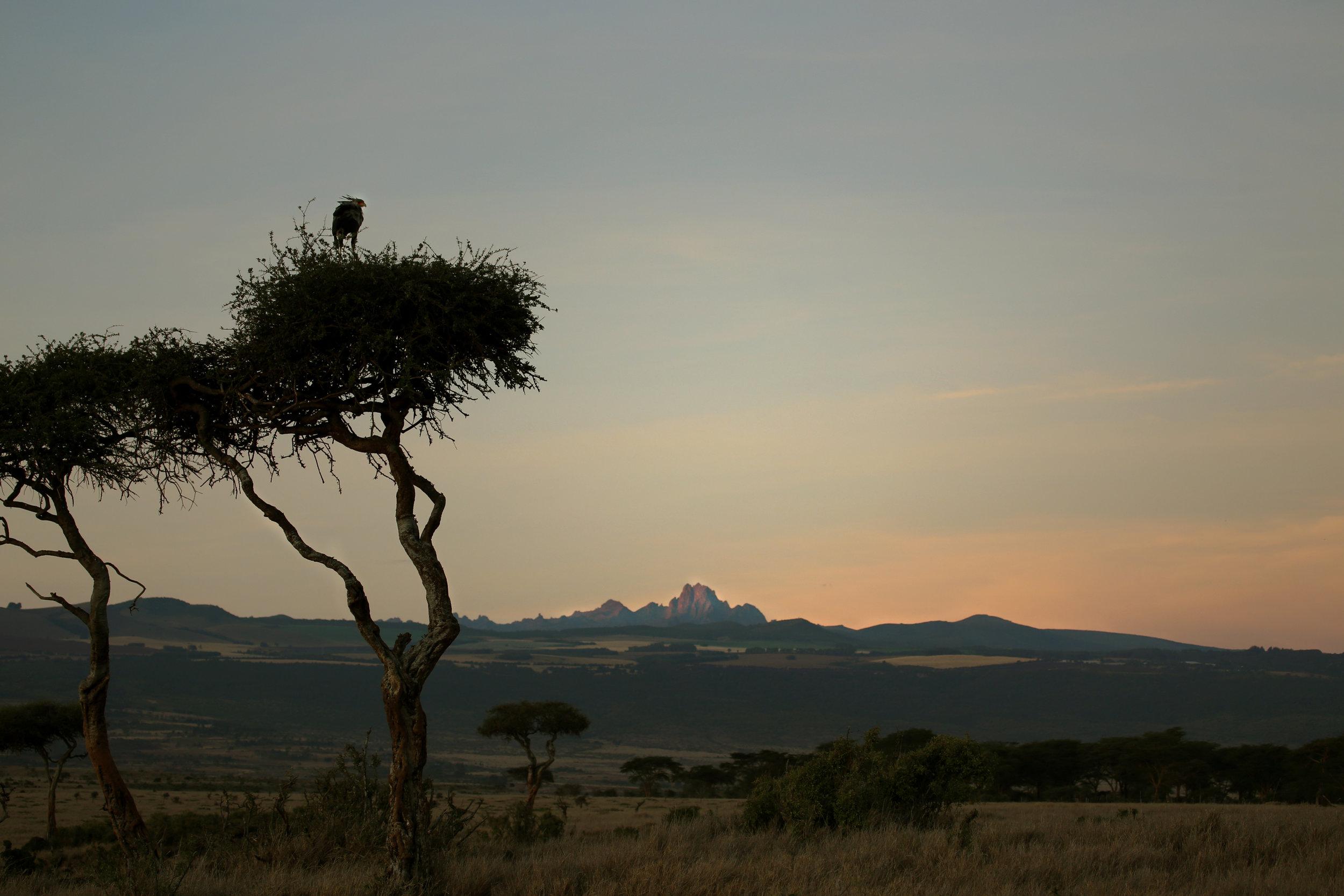 safari website page.jpg