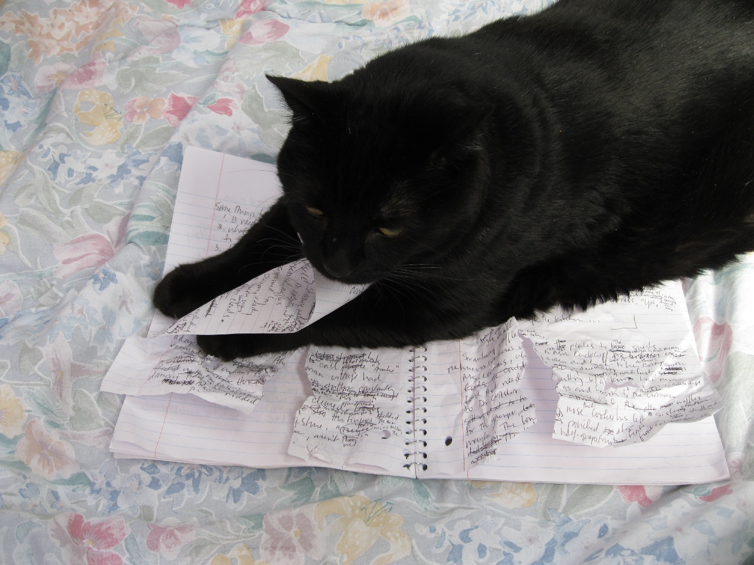 Cats possess exquisite editorial sensibilities. Mister Y removes some text.