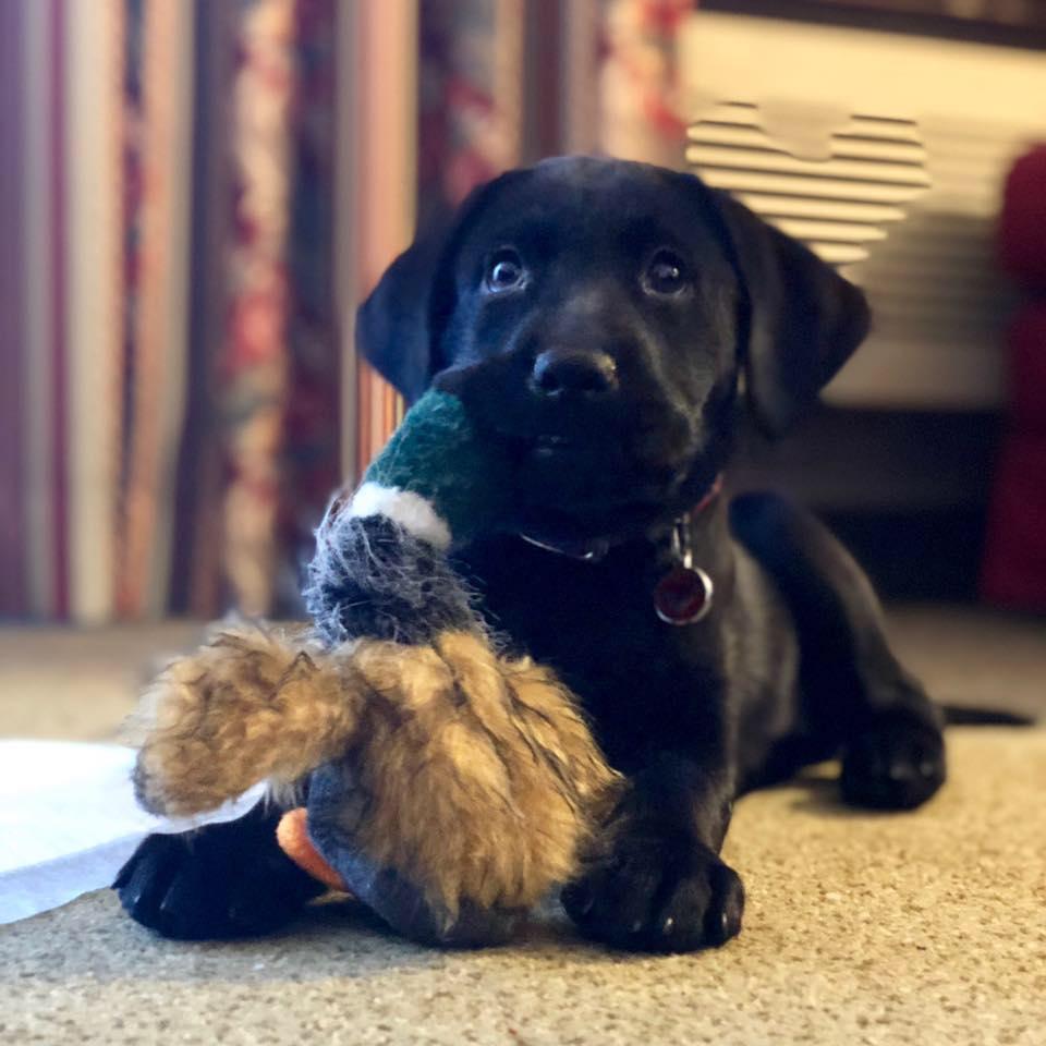 Tessa     Therapy Dog