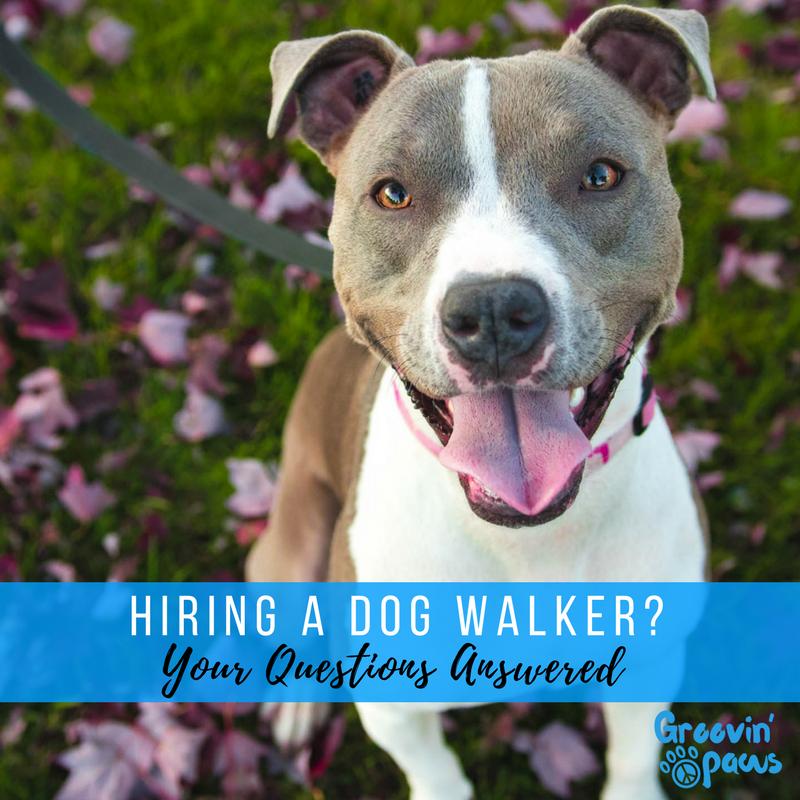 Hiring a Professional Dog Walker Mt. Pleasant.png