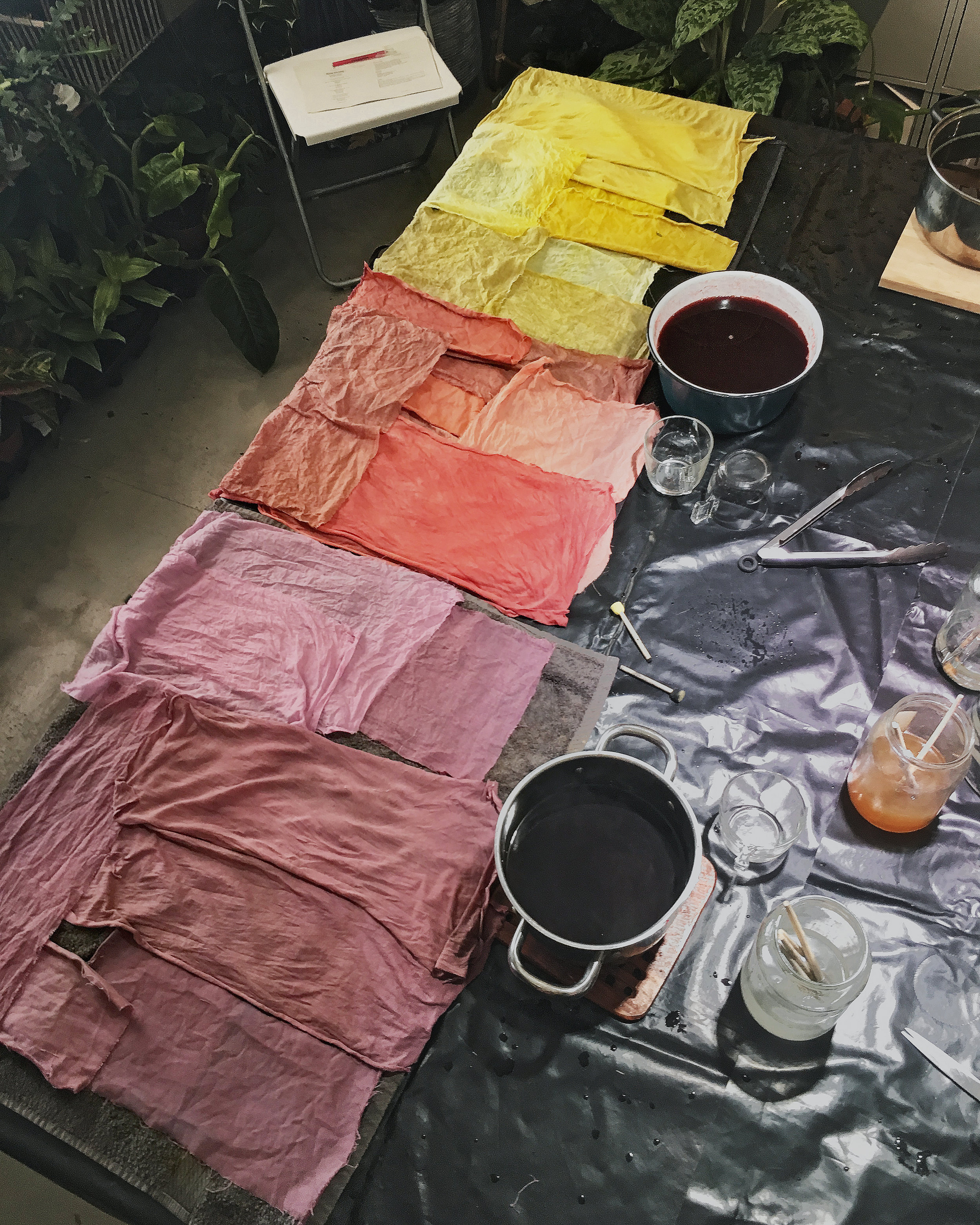 Workshop results - Dyeing with Plants. Click to see all the colors we made.