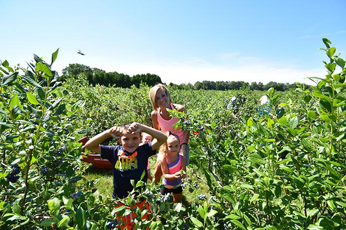 u-pick-blueberries-6.jpg