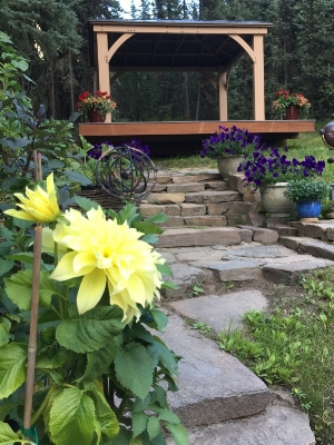 - It's summer in Fairbanks and when I'm not writing, I'm usually trying to steal a few hours and play in the yard. The deck and gazebo are the newest addition, with a knock out view to Ester Dome that explains why I've cut trees, dug holes, lost my boots in the muck and had a ton of fun doing it all.The willow walls in the foreground are woven from young growth from Moose Creek which crosses our twenty acres. The rocks are scavenged from out beyond Murphy Dome (the family helps with the loading, but not the building; that's all me). And the gazebo was raised with the help of a husband plus two very good friends.I've been working on the stairs and stone walls for years adding a section here, a path there. They're dry stacked since the oldest techniques work best on permafrost that shifts with the seasons. One of the best resources I've found is a book called The Art and Craft of Stonescaping by David Reed though there are many others as well and they're not hard to find.Weaving the walls is easier than you'd expect, and since the willow grows virtually everywhere, it's free. Cut it while it's green so it's pliant. I pound rebar a few feet into the ground for stability, but wood stakes would also work. Here's a few images for ideas on building willow walls.