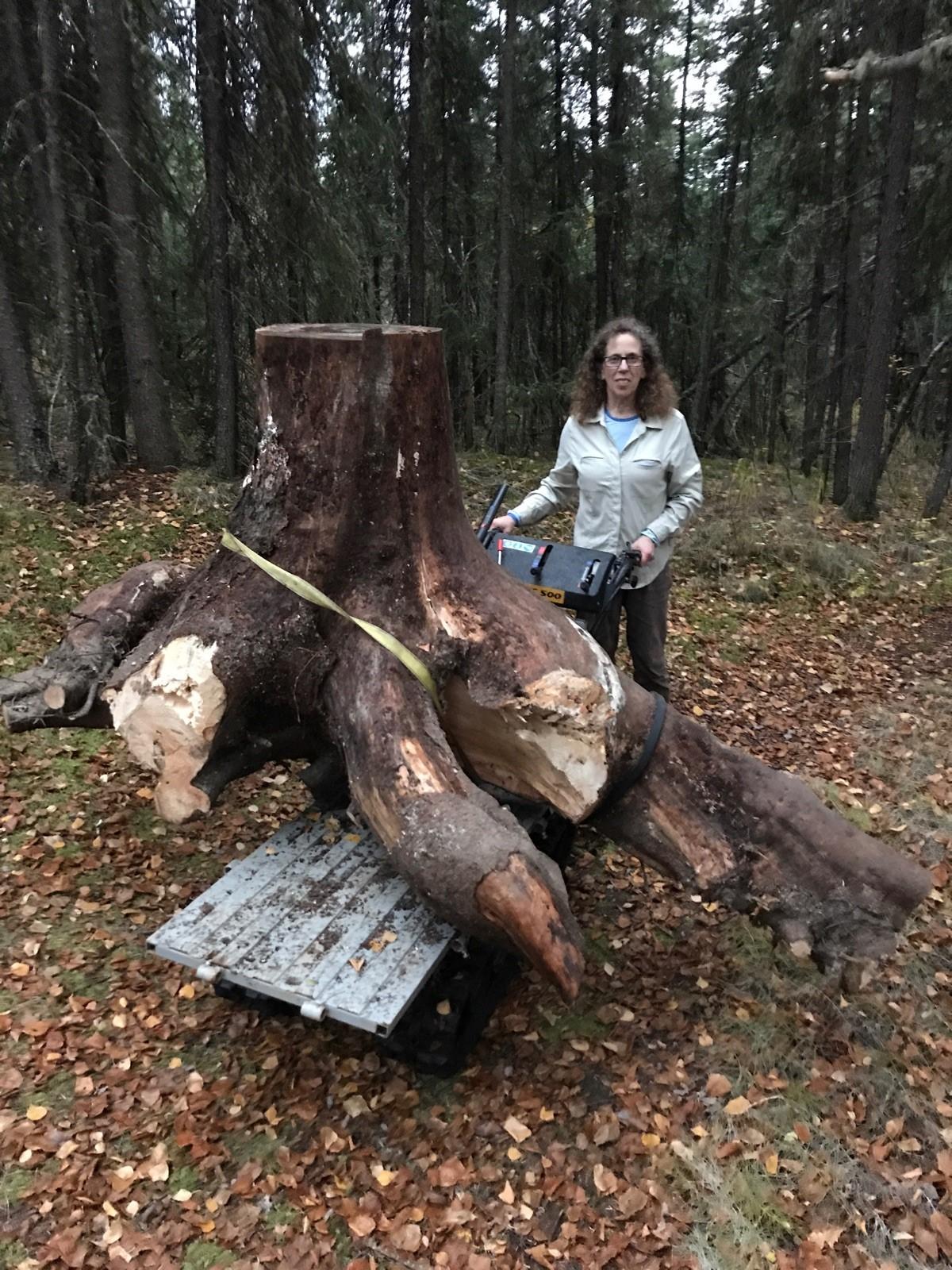 tree trunk 2017.jpg