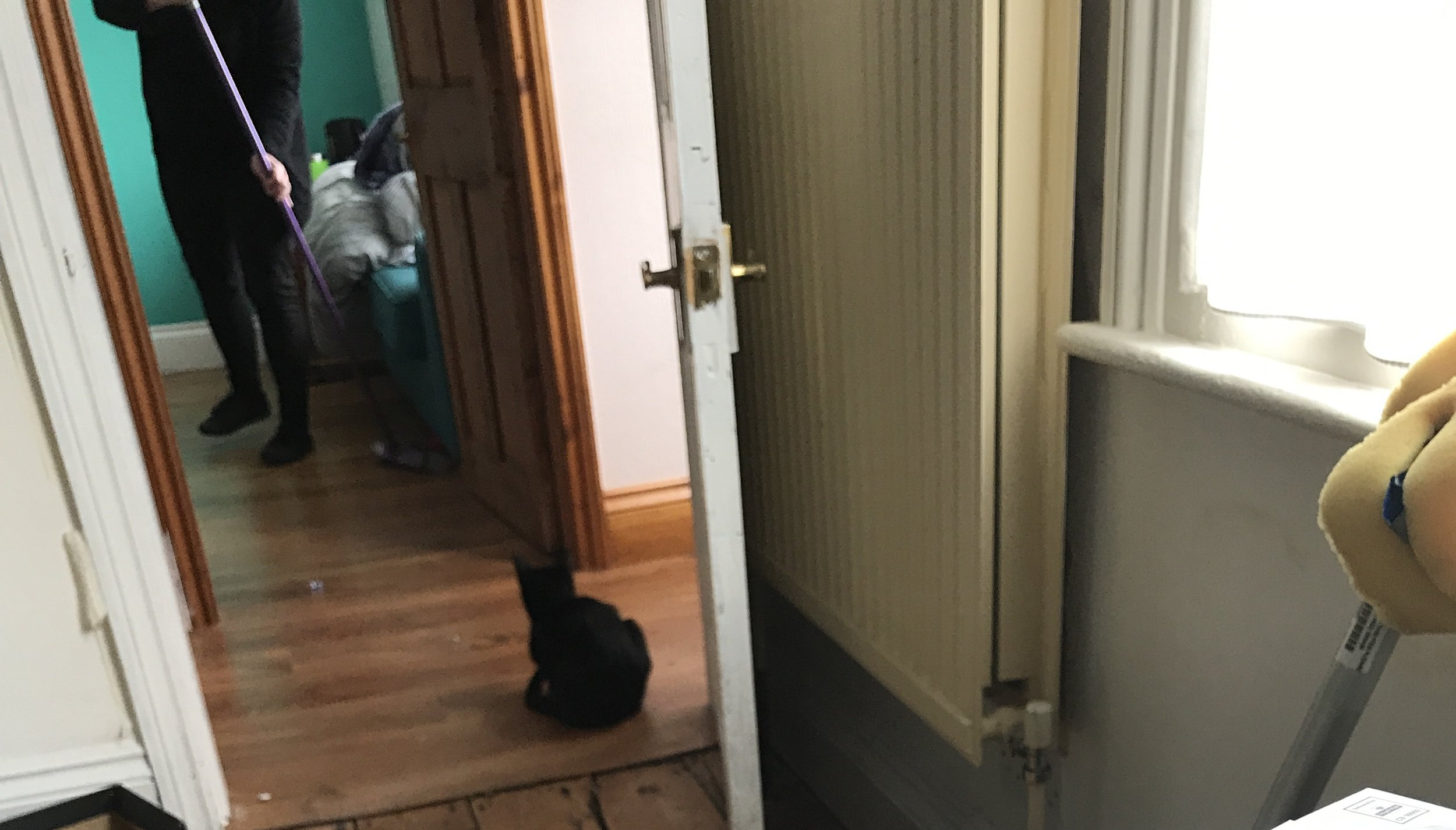 """Twatcat curious about the """"stranger"""" in the house, I just called her """"Angel"""""""