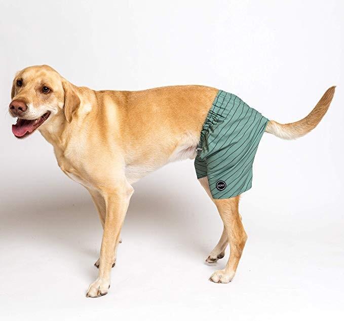 Dog Togs.jpg