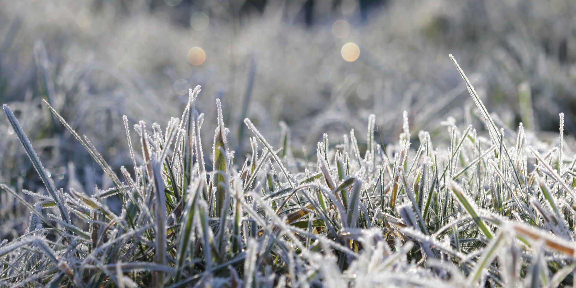 sunlight-reflect-on-frost-covered-grass.jpg