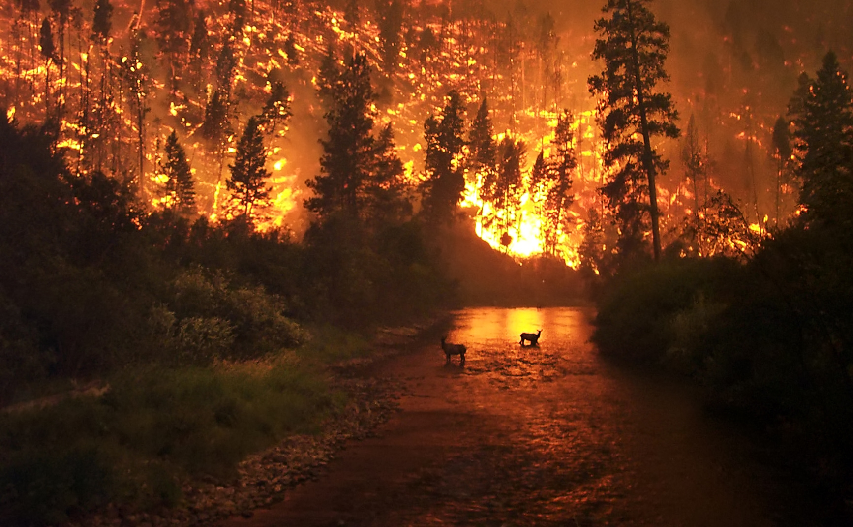 wikimedia cc photo of deer in a wildfire
