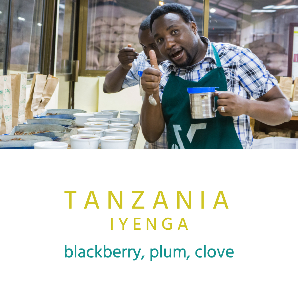 The Iyenga Cooperative was established in 2003 and has 193 members whose primary income comes from coffee, creating stability in their families andcommunities. The coffee coming from this cooperative is gaining a reputation for being one of the most flavorful coffees in this region of Tanzania.