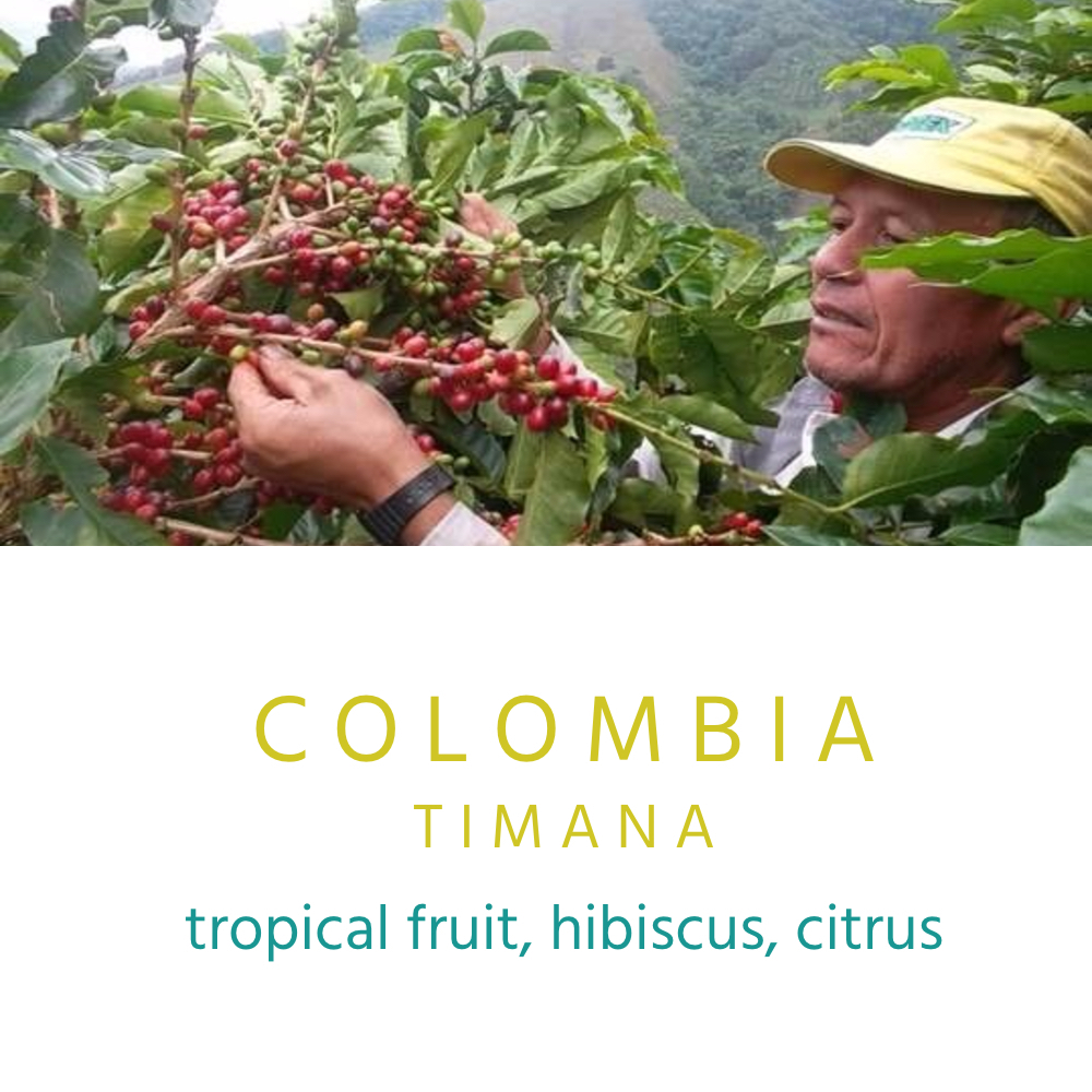 This coffee comes from an association of coffee producers that's made up of 405 farmers and their families, located in the south of the Huila region, which is one of the important coffee regions in Colombia. We think you'll love its unique and delicate flavors.